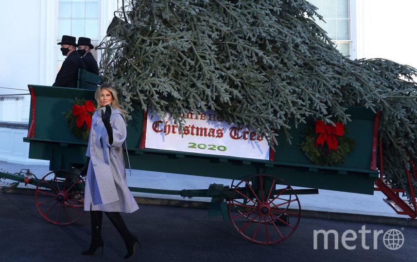 Мелания встретила рождественскую ель. Фото Getty