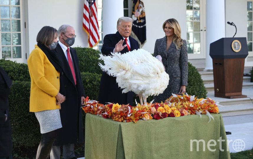 Помилование индюков у Белого дома. Фото Getty