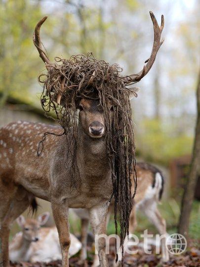 Приют Белоснежки. Фото vk.com