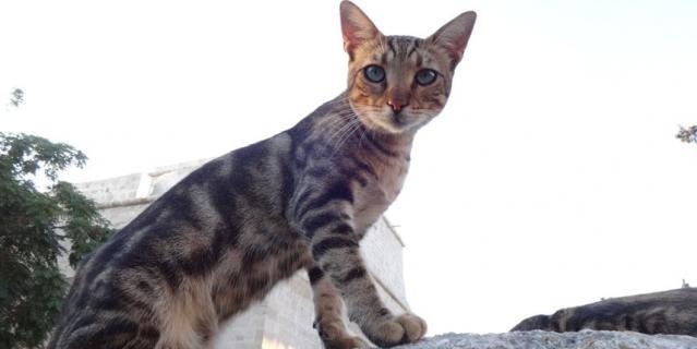 Котик с красивыми глазами, встретили на улице Лимасола, Кипр.
