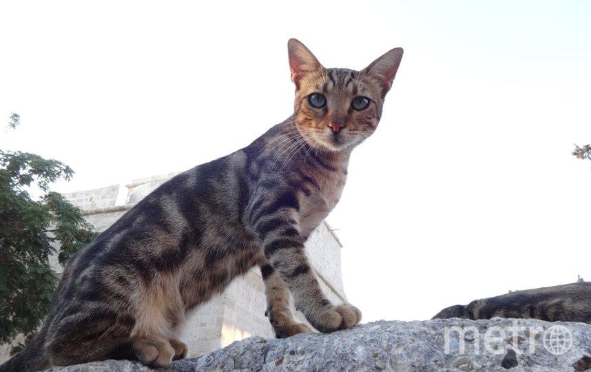 """Котик с красивыми глазами, встретили на улице Лимасола, Кипр. Фото Екатерина Наливайко, """"Metro"""""""