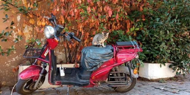 Знаменитые Стамбульские коты, которых можно встретить везде и в самых неожиданных местах.
