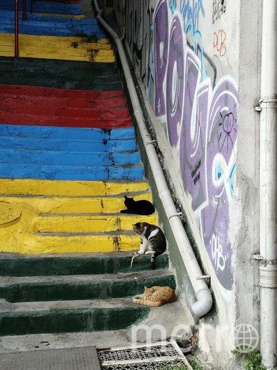 """Котик в городе Котор, Черногория. Встретились с ним по пути на вершину крепости Святого Иоана. Фото Наливайко, """"Metro"""""""