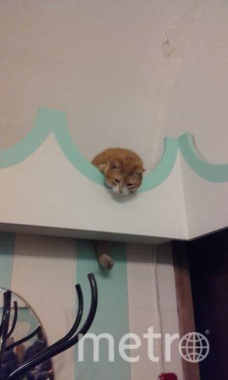 """Кот в пышечной на Большой Конюшенной. Фото Анна, """"Metro"""""""