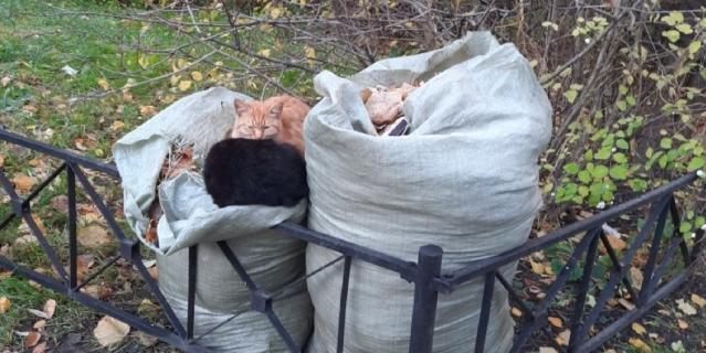 Вот решила тоже прислать наших Дворовых котят. Они очень дружны и неразлучны, всегда вдвоём.