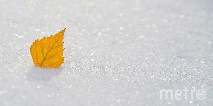 Зима вступает в законные права: погода в Петербурге на первую неделю декабря