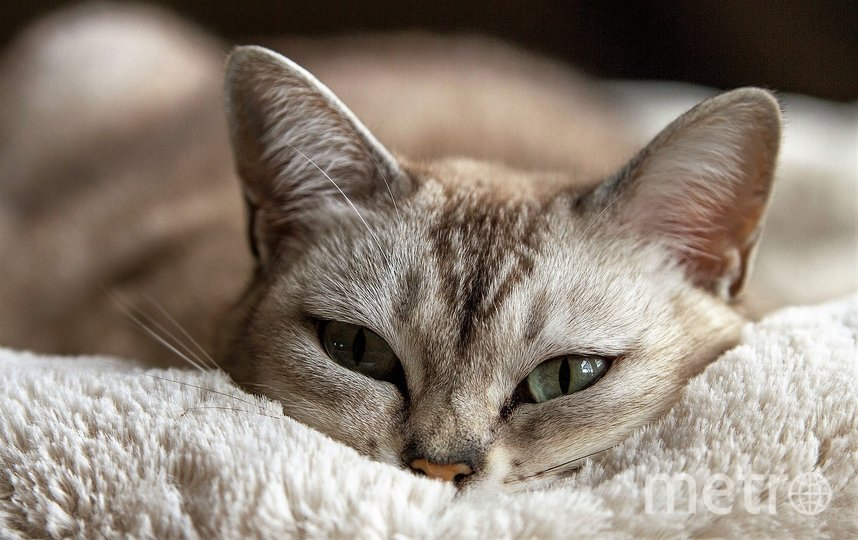 Порода кошки, которую хотят завести Байдены, не сообщается. Фото pixabay.com