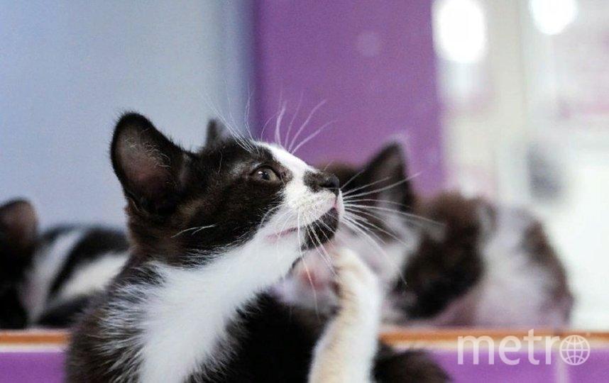 Коты Эрмитажа получили наследство. Фото Metro.