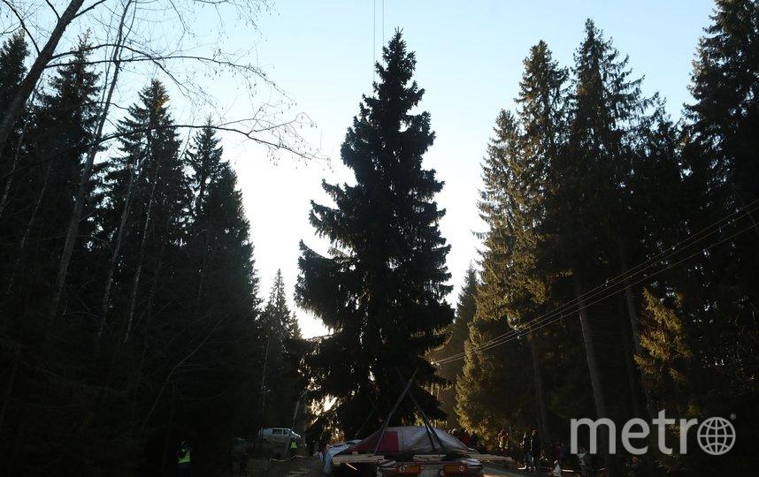 """На Дворцовую площадь она будет доставлена 7 декабря. Фото Святослав Акимов, """"Metro"""""""