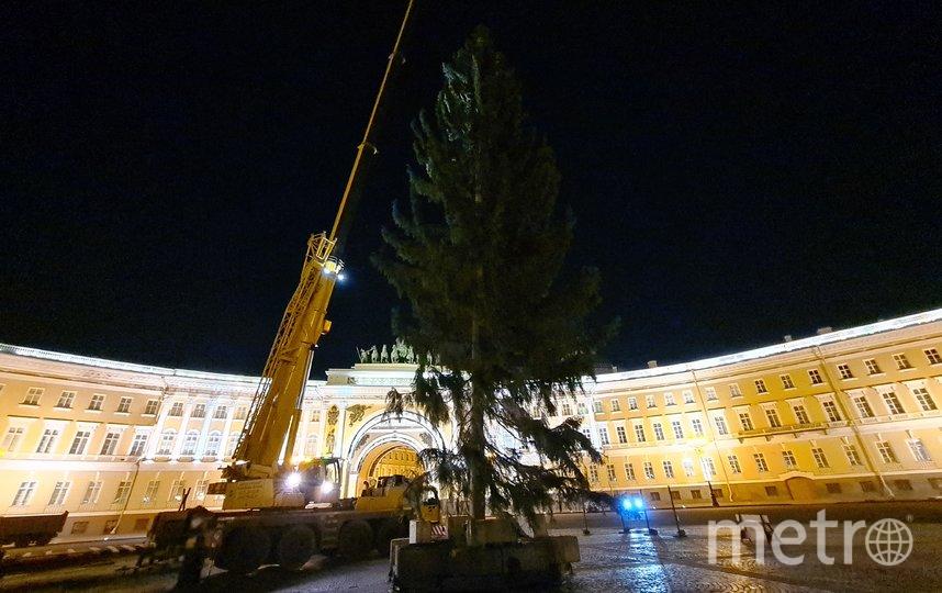 """Так выглядит елка на  Дворцовой. Фото предоставлены администрацией СПб, """"Metro"""""""