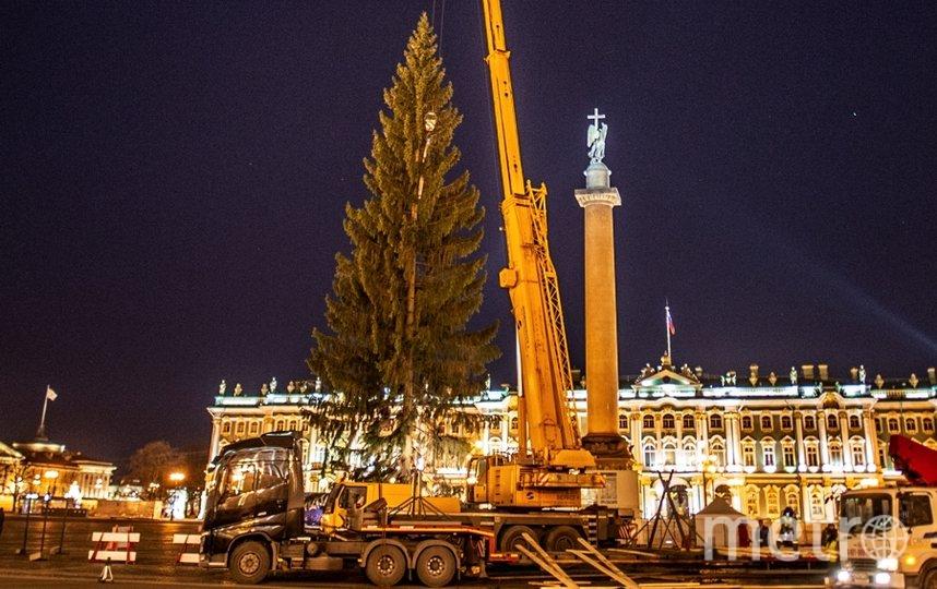 """Так выглядит елка-2021 на  Дворцовой. Фото Святослав Акимов, """"Metro"""""""