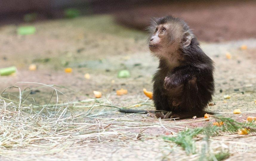 "Леонс хорошо ест, но пока плохо растёт. Фото Алена Бобрович, ""Metro"""