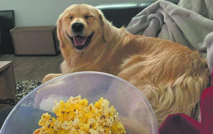 """Фото собак-улыбак. Фото соцсети, """"Metro"""""""