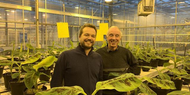 Герт кема руководитель отдела тропической фитопатологии Вагенингенского университета, Нидерланды.