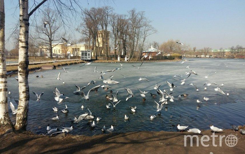 """Ольгин пруд. Фото Евгения Назарова, """"Metro"""""""