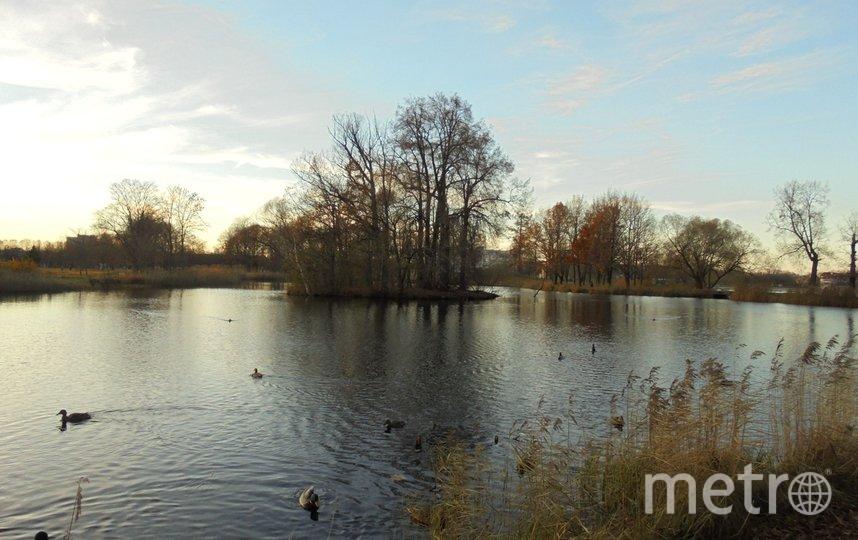 """Гуляя вокруг пруда вы встретире бесконечное количество уток. Фото Евгения Назарова, """"Metro"""""""