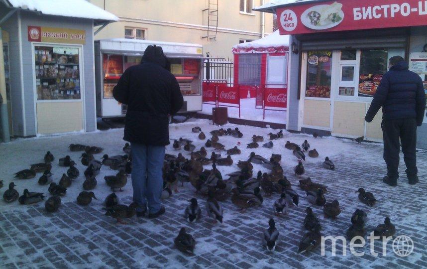 """Зимой утки сами приходят за хлебом на рынок. Фото Евгения Назарова, """"Metro"""""""