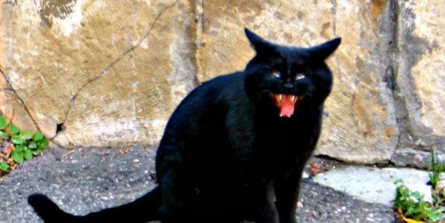 Это кот из Кисловодска. Снимок сделан накануне Хэллоуина. Как раз, к празднику.
