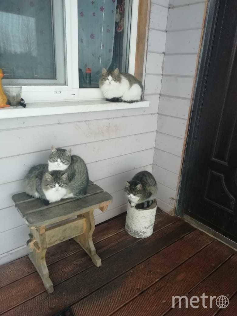 """Фото котиков,которые приходят к нам гости. На фото они в ожидании чего-нибудь вкусного. Фото Кувшинова Александра., """"Metro"""""""