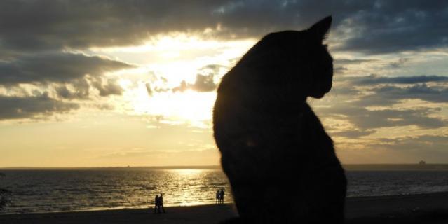 Это котик из Сестрорецка.