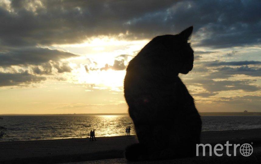 """Это котик из Сестрорецка. Фото Ольга Даль, """"Metro"""""""