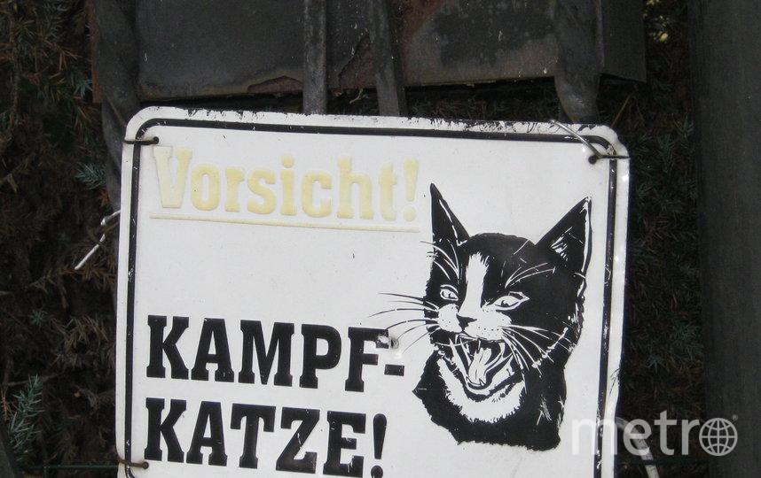"""Вывеска - """"Осторожно, злой кот!"""" из Калининграда. Фото Ольга Даль, """"Metro"""""""
