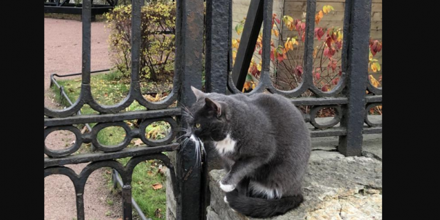 Котик у Владимирского Собора, Санкт-Петербург.