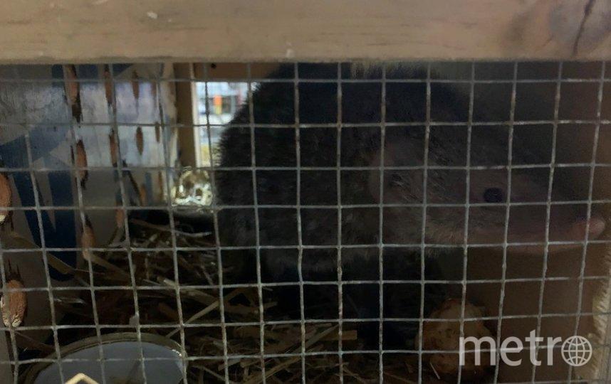 Животные прилетели в Петербург из Новосибирского зоопарка. Фото ursn.spb.ru/.