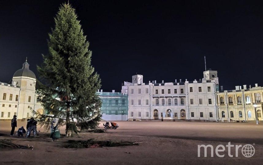 Перед Гатчинским дворцом установлена ёлка. Фото https://gatchinapalace.ru/pressa/pered_gatchinskim_dvortsom_ustanovlena_yelka/