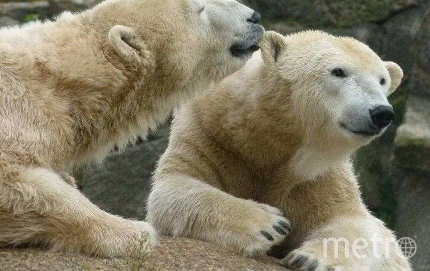 Патрульные заметили около 30 медведей. Фото Pixabay.