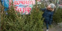 На улице и онлайн: где и как выбрать живую ёлку в Петербурге