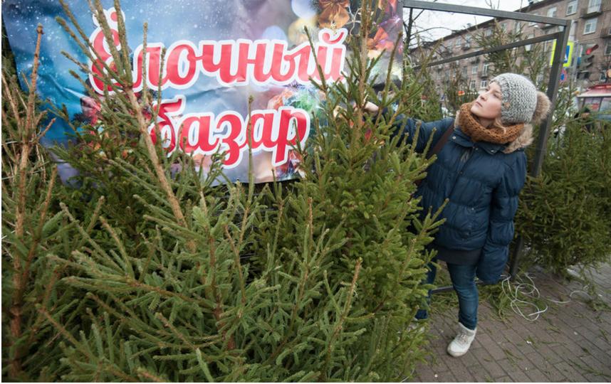 """До Нового года осталось чуть больше недели, на улицах Петербурга появились ёлочные базары. Фото """"Metro"""""""