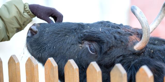 Ленинградский зоопарк подготовил новогоднюю программу.