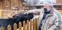 Почесать корову из Якутии – это к счастью