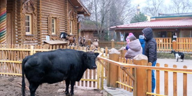 Якутская корова Сахая.
