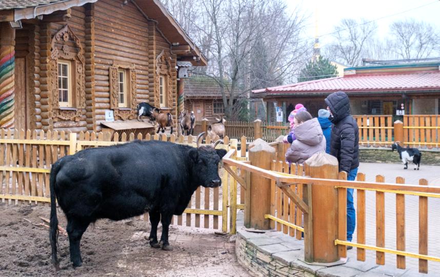 "Якутская корова Сахая. Фото Алена Бобрович, ""Metro"""