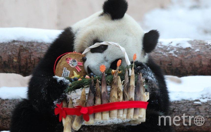 "Панды получили угощение (архивное фото). Фото АГН ""Москва""/Андрей Никеричев"