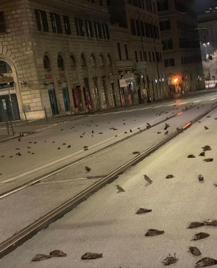 Мертвых птиц обсуждают в соцсетях. Фото https://www.instagram.com/welcometofavelas__/