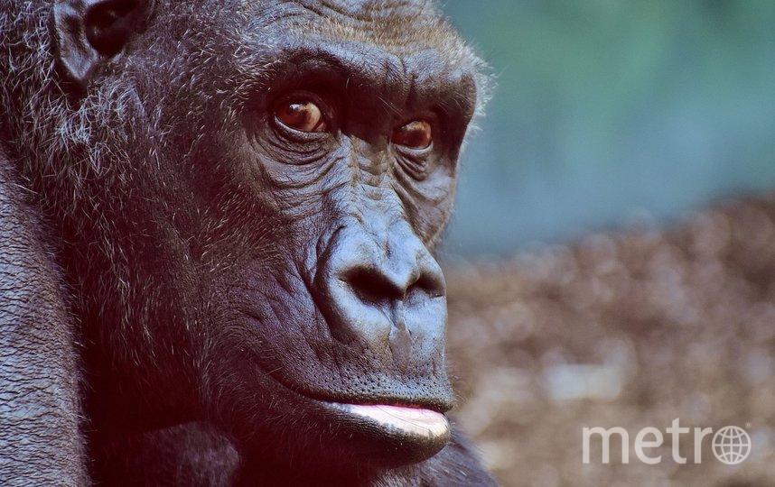 Предполагается, что животные заразились от бессимптомного сотрудника. Фото pixabay.com