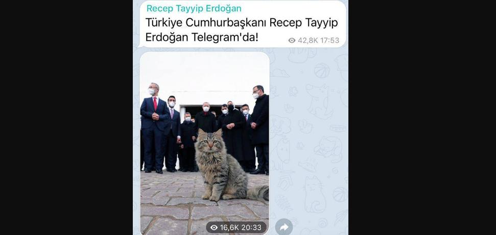 Президент Турции Реджеп Тайп Эрдоган в первом же сообщении запостил кота.