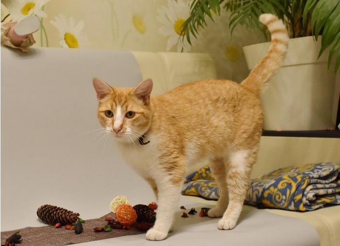 Это тот самый котик, который подхватил ковид от хозяйки. Фото https://www.influenza.spb.ru/news/id587/