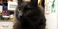 Сбежавшего в аэропорту петербургского кота искали почти полгода