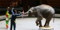 Большой Московский цирк впервые показал слониху Николь