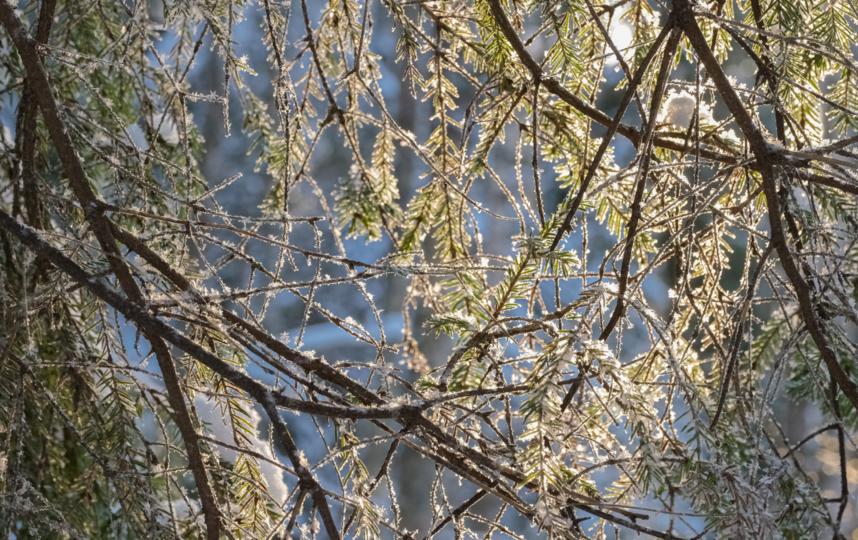 """В Линдуловскую рощу за зимней сказкой. Фото Алена Бобрович, """"Metro"""""""