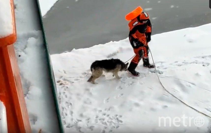 Волонтеры спасли собаку, застрявшую на льдине. Фото Getty.