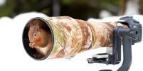 Веселый тред: Как дикие животные беспардонно мешают работать фотографам