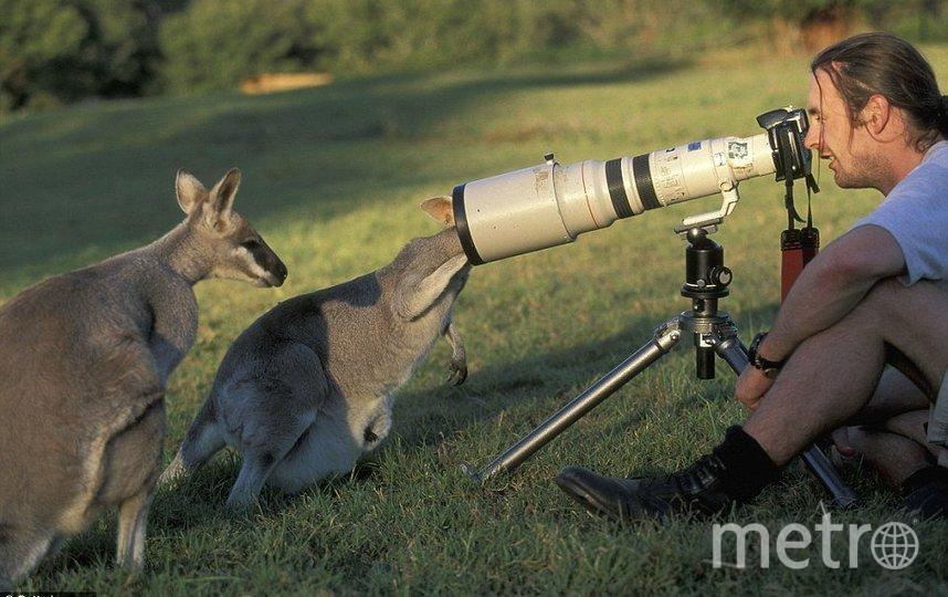Смешные снимки показывают, как любопытные звери мешают фотографам работать. Фото JoaquimCampa
