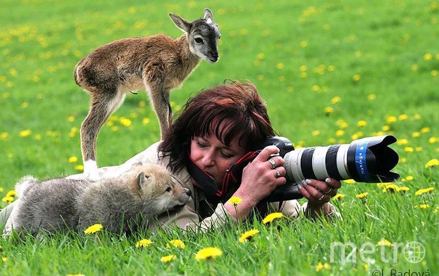 Смешные снимки показывают, как любопытные звери мешают фотографам работать. Фото JoaquimCampa.