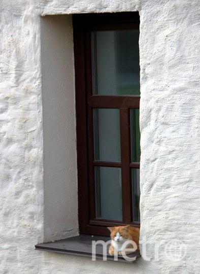 "Зорин Никита Тихвин, монастырский кот. Фото ""Metro"""