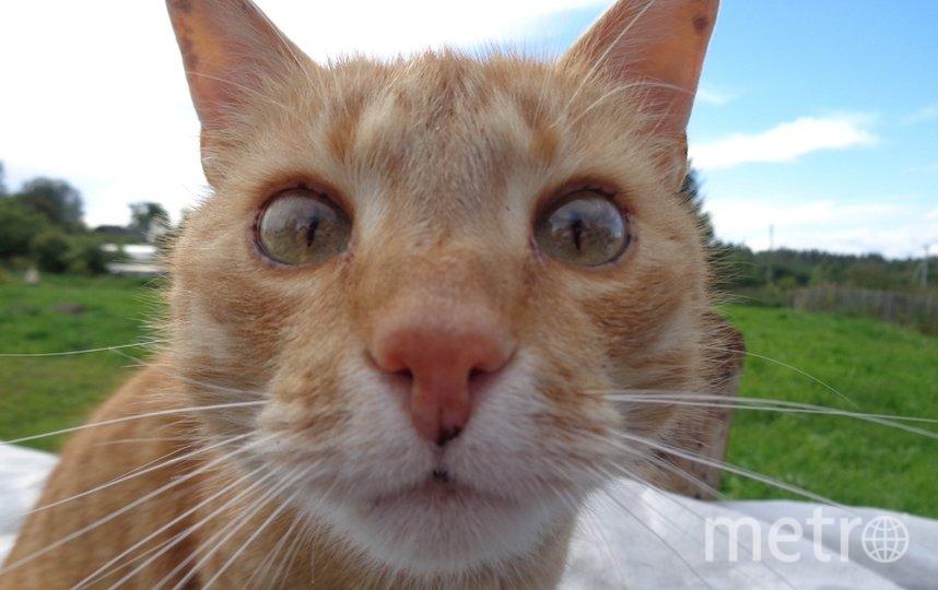 """Соседский кот Кузя.. Фото """"Metro"""""""